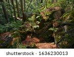 Vegetation in the Felswandergebiet, or Rock Hiking Area of the Nationalpark Bayerischer Wald, or Bayerischer Wald National Park, Bavaria, Germany, Europe