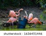 Pink Flamingo Fighting Over...