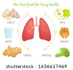 the best food for the lungs....   Shutterstock .eps vector #1636617469