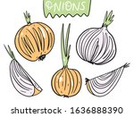 different onions set. hand...