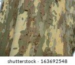 Bark Of Platanus  Acerifolia ...