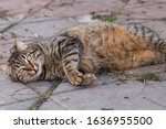 Cute Stray Cat Lying On The...
