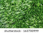 Abstract Green Moss For Textur...