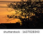 full blooming of cherry blossom ...   Shutterstock . vector #1637028343