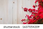 Red Bougainvillea Flower On...
