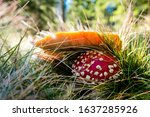Red Poison Mushroom With Grass...