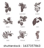 berries sketch hand drawing.... | Shutterstock .eps vector #1637357863