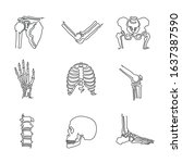human bone and joint single... | Shutterstock .eps vector #1637387590