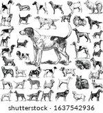 Dogs Set Illustration In Retro...