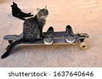 Cat And Shoes On A Longboard