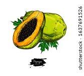 papaya vector drawing. hand... | Shutterstock .eps vector #1637691526
