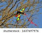 Kid\'s Kite Stuck On The Branch...