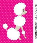 poodle vector - stock vector