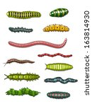 caterpillars and worms set...