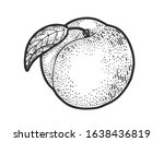 Peach Fruit Sketch Engraving...