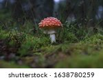 Mushroom In The Forest ...