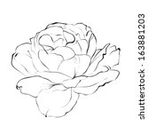 contour of rose isolated over... | Shutterstock .eps vector #163881203