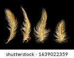 Set Of Gold  Feather. Vector...