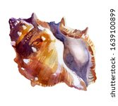 Watercolor Illustration. Shell...