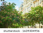 Scenic View Of Pink Chestnuts...