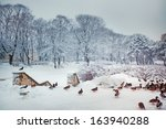 Winter Park In Riga With Ducks...