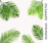 green plam leaves collections... | Shutterstock . vector #1639491763