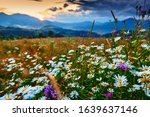 Wildflowers  Meadow And...