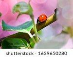 Bright Little Ladybug Among The ...