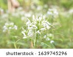 white flowers on floral... | Shutterstock . vector #1639745296