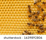 Bee On Honeycombs With Honey...