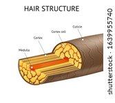 realistic detailed 3d hair... | Shutterstock .eps vector #1639955740