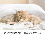 Two Cute Thai Cats Sleeping On...