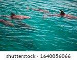 Dolphin Family In Wild In...