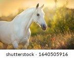 White Horse Portrait In Poppy...