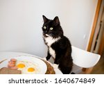 Cat Climbs On The Table For...