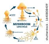 mushroom anatomy life cycle... | Shutterstock .eps vector #1640808409