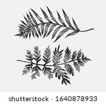 fern hand drawn ink... | Shutterstock .eps vector #1640878933