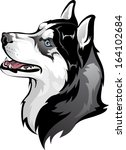 Siberian Husky - stock vector