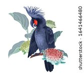 black cockatoo on the branches... | Shutterstock . vector #1641466480