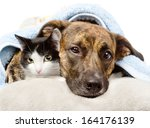 Stock photo sad dog and cat lying on a pillow under a blanket isolated on white background 164176139