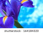 beautiful blue iris flowers... | Shutterstock . vector #164184320
