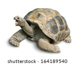 Stock photo animal portrait of a beautiful giant tortoise looking funny and cheerful isolated on white 164189540