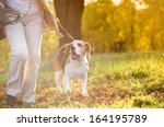 Stock photo senior woman walking her beagle dog in countryside 164195789