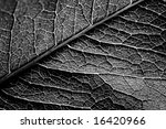 grunge leaf. | Shutterstock . vector #16420966