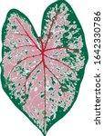 Vector. Pink Leaf Of Caladium...