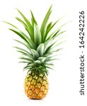 pineapple isolated on white | Shutterstock . vector #164242226