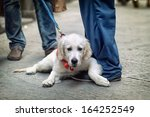Stock photo people walking on the street with dog on leash 164252549