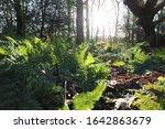 Sun Shining Into Dutch Forest...