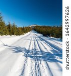 Snow Covered Road With Young...