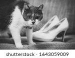 Wedding Cat Is Sitting On A...